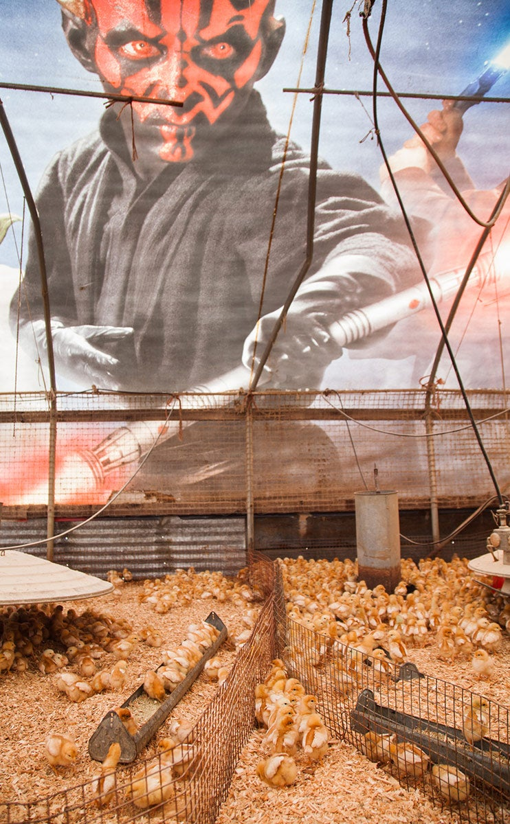 Farmer Turns an Old Star Wars Billboard Into Greatest Chicken Coop Ever