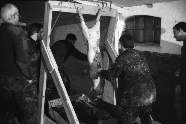 Pigs are being strung-up and shot to train army medics in Denmark