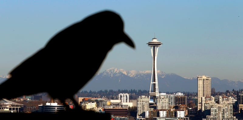 Birds Plot Systematic Takeover of America's Cities