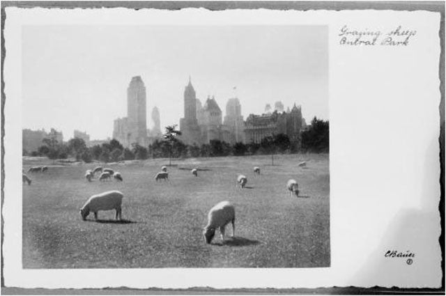 Sheep in Central Park, Archaeo-Bunnies, and Cockroach Pheromone Bots