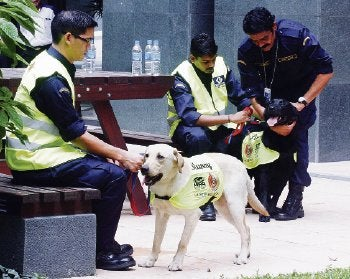 One of Malaysia's Anti-Piracy Sniffer Dogs Found Dead at Home
