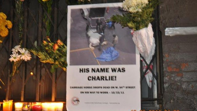 NYC Carriage Horse Autopsy: 'Severe Pain' at Time of Death