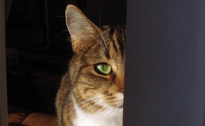 Why Cats Are Not Good Spies