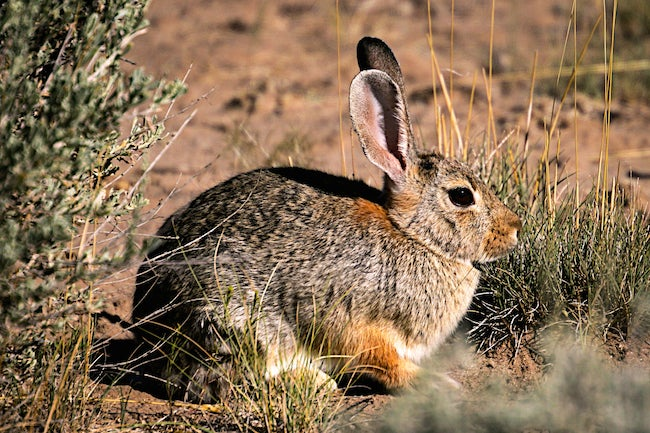 """Colorado Health Officials Warn Residents of """"Rabbit Fever"""""""