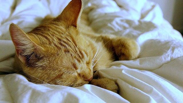 Look Ahead to Sleeping In—It's This Week's Open Thread