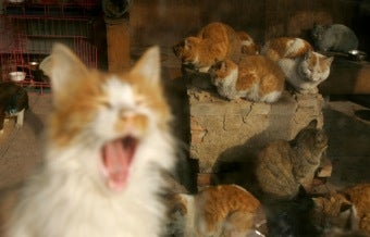 Cats Evicted From Bush Library Grounds • Miss America In Favor Of A Lesbian Winning Pageant