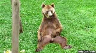 16 Adorable Animals React To BuzzFeeᴅ's Darren Rovell Story