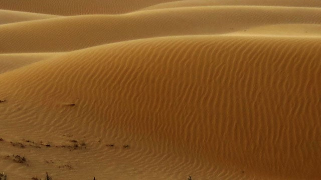 Scientists Flattened a Desert With Bulldozers to Study Sand Dunes