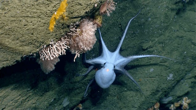 Explore the ocean floor via live cam, in high definition, RIGHT NOW