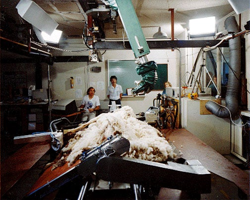 Sheep-Shearing Robot Is Tough to Watch in Action