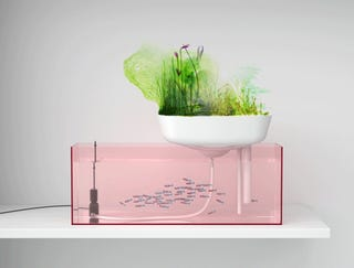 Floating Garden Freshwater Aquarium Naturally Filters Fishpoop Into Fertilizer