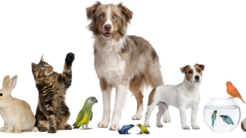 Calling Animals 'Pets' Hurts Their Self-Esteem