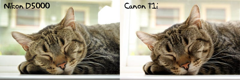 Canon Rebel T1i vs Nikon D5000: Entry-Level DSLR Battlemodo