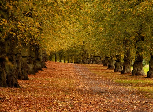 The science of autumnal beauty