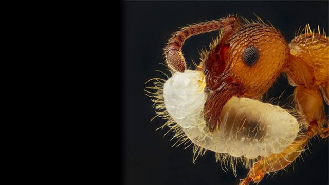The Best Ten Micro Photographs of 2012