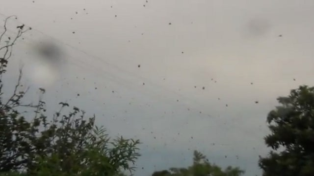 Think Nemo's Bad? In Brazil It's Raining Spiders