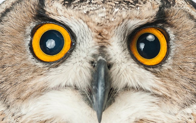 Killer Owls Have Figured Out Doors, All Pets Doomed