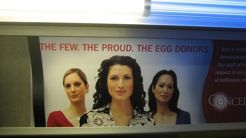 The Risks (and Benefits) of Donating Your Eggs