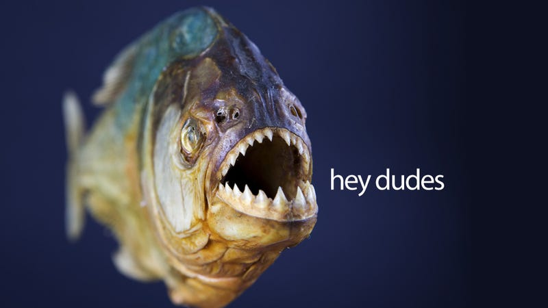 Those Motherf*cking Piranhas Can Talk to Each Other