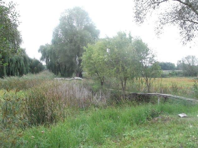 Veszélyben vannak a Debrecen környéki tavak