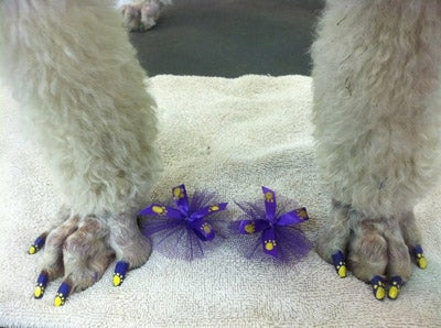 Doggie Nail Art: A Fun New Way to Make Sure Your Dog Hates You
