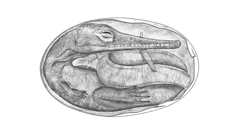 The Oldest Embryos Ever Discovered Show That Some Prehistoric Reptiles Were Viviparous