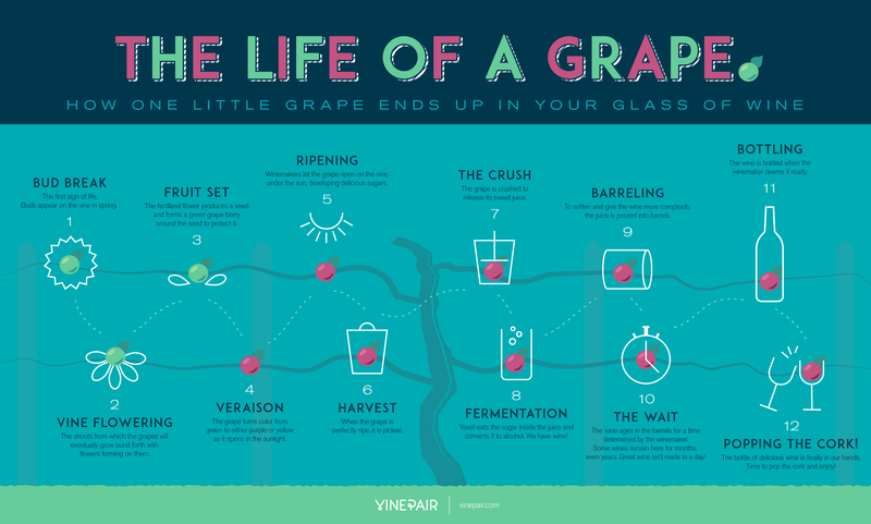 This Graphic Shows You How a Grape Goes from Vine to Wine