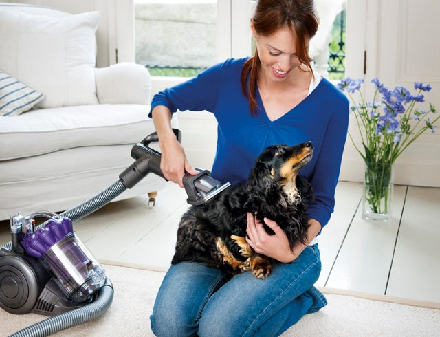 Why Bother Vacuuming the Floors When You Can Just Vacuum the Dog?