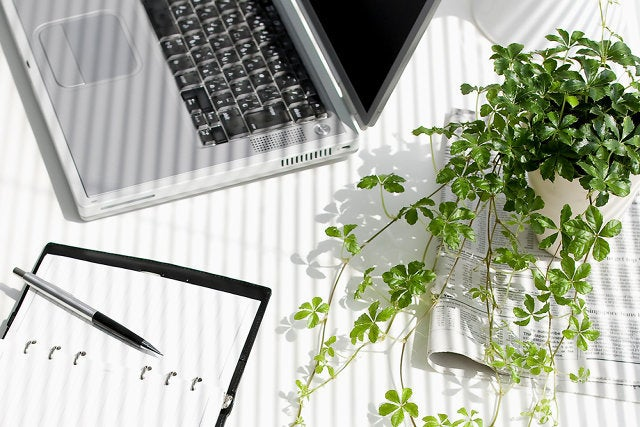 Why Desk Plants Can Make You More Productive