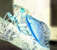Thrill-Crazed Space Bugs Swarm Through World's Longest Novel