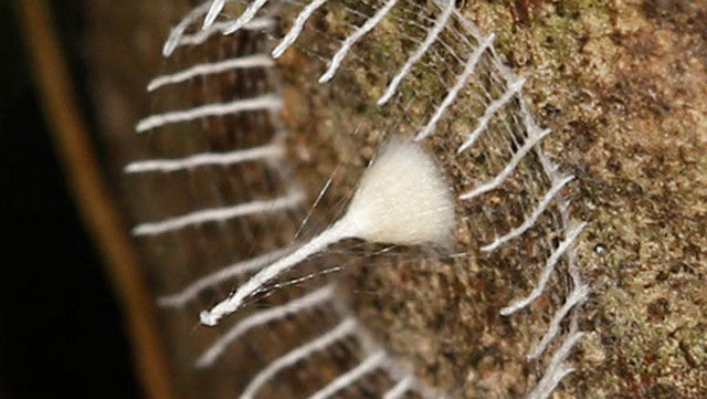 Can You Identify a Mystery Cocoon Which Has the Whole Internet Stumped?
