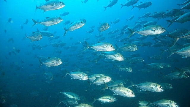 Global warming is going to start shrinking fish