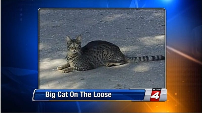 Detroit's 'Giant Cat' Shot And Killed, We're All To Blame For This [UPDATE]