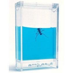 Antquarium is a Gel-Filled Ant Farm