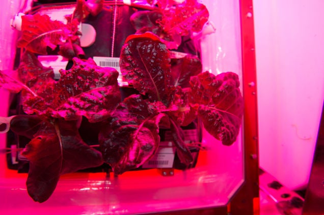 Growing Lettuce In the Tokyo Subway Isn't So Different From Growing It In Space
