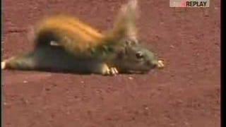 Animals Invading Sports Events