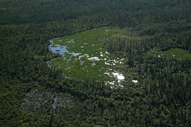 Amazing Landforms Shaped By Animals