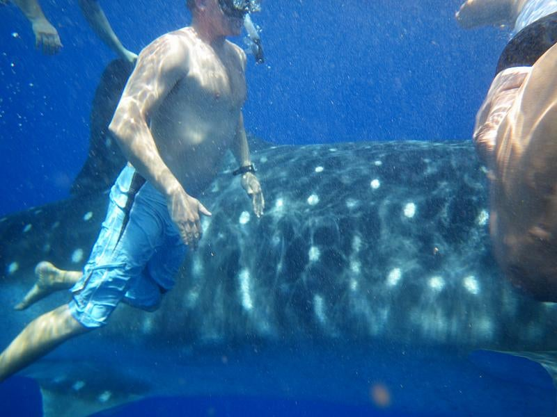 Review: Pentax W60 Waterproof Camera Catching Whale Sharks