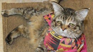 Who Will Adopt the World's Saddest Cat?