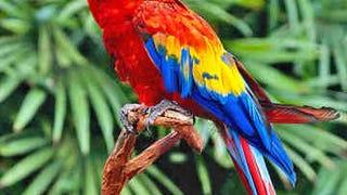 Birdbrain Crashes Car; Parrot Unhurt