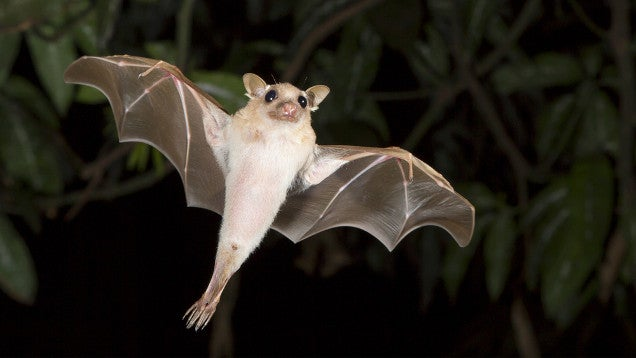 "Hearing ""Ebola"" After Eating Bat Meat Can't Be Good"