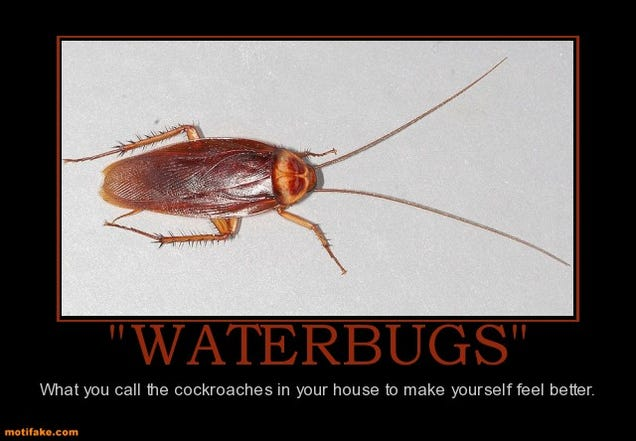 Water bug vs cockroach - photo#21