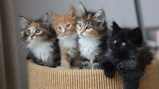 Have A Kindle of Kittens, and 10 Other Hilarious Names for Animal Groups