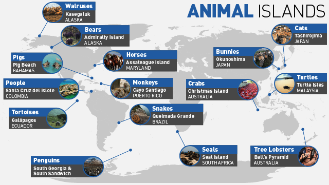 Beyond Bunnies: 14 Other Islands Packed With Your Favorite Animals