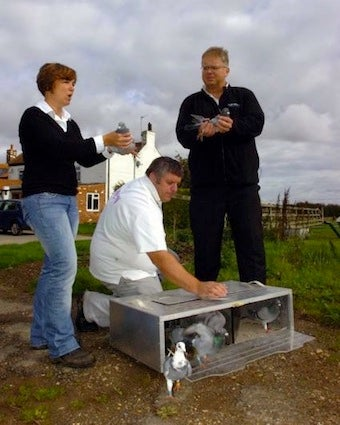 Carrier Pigeons Faster Than Internet In Rural England