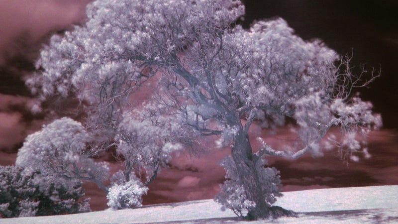 Modify an Old Camera to Give an Awesome Infrared Effect to Your Photos