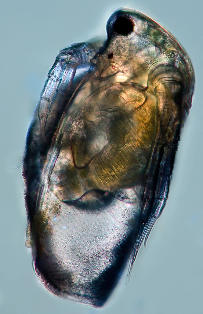 Under a microscope, the smallest animals on Earth become beautiful nightmare fuel