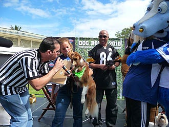 This February, Hines Ward Screws The Pooch