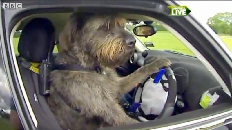These Dogs Are Actually Driving Cars