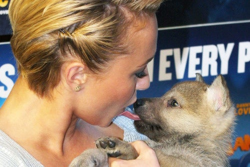 Why You Should Never Kiss a Dog on the Red Carpet